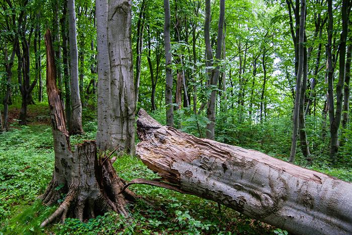 A fallen tree.